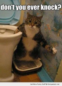 funny-shocked-surprised-cat-bath-room-toilet-dont-ever-knock-pics