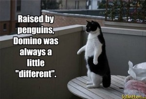 funny-cat-pictures-lolcats-raised-by-penguins